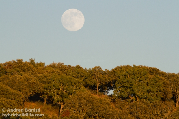 "Full moon above the ""Dehesa""- Campanarios de Azaba - Canon 7D, 300/f4 L (f/9.0, 1/640, 640iso"