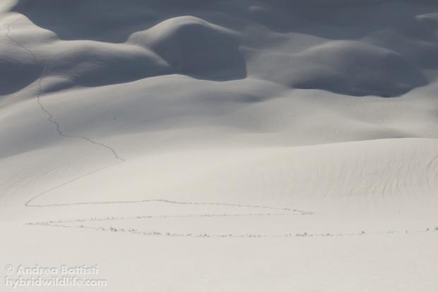 Una mia traccia battuta nella neve - Canon 7D, sigma15mm fisheye f/2.8 (f/7.1, 1/8000, 1250iso)